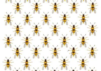 Пчеловодство как бизнес, бизнес на пчелах, пчелиный бизнес